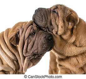 amor, perro