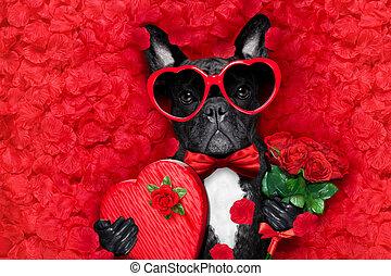 amor, perro, valentines