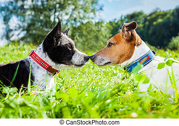 amor, perros