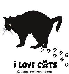 amore, scheda, gatti