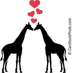 amour, girafes