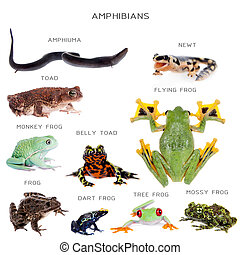 Amphibian education set on white