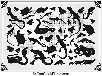 Amphibian reptile, snake, turtle, lizard and frog vector