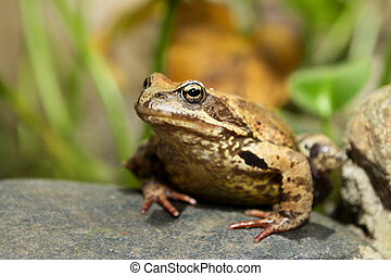 Amphibious animal frog.