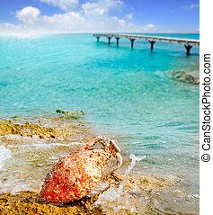 Amphora roman with marine fouling in Mediterranean
