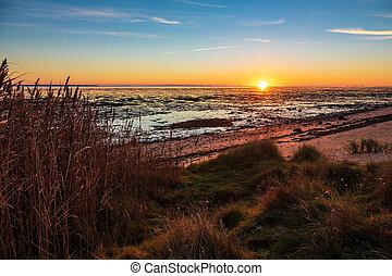 amrum, isla, costa, alemania, mar, norte, salida del sol