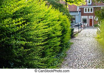 amszterdam, bushes., zöld