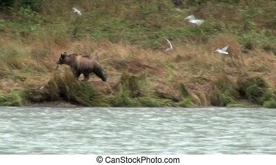 amusement, brun, avoir, ours