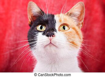 Amusing Calico Cat - Amusing and Funny Calico Cat Gazing...