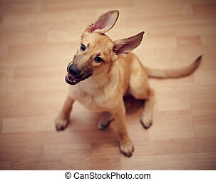Amusing not purebred puppy. Mongrel puppy. Puppy of beige...
