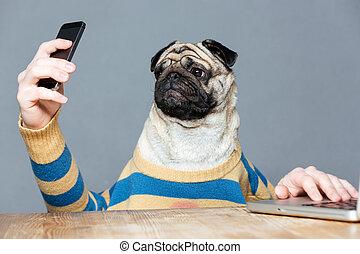 Amusing pug dog with man hands using smartphone - Amusing...