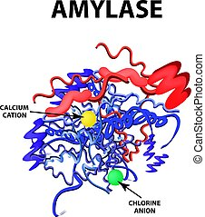 Amylase is a molecular chemical formula. Enzyme of the...