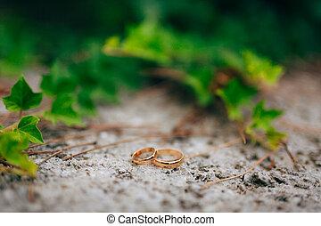 anéis casamento, ligado, a, hera