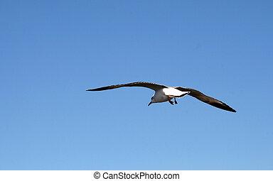 an, 圖像, ......的, a, 美麗, 海鷗, 在, the, 明亮的藍色, 天空
