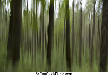 Abstract woods background