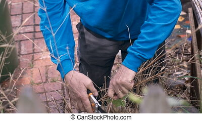 An active senior cuts a plant with sheers and puts the...
