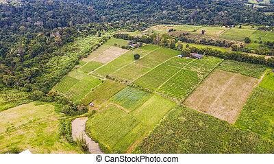 An aerial view of Agricultural area