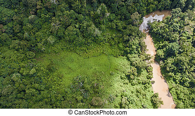 An aerial view of forest