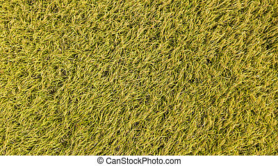 An aerial view of Paddy