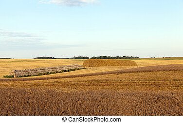 An agricultural field with a crop