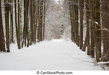 an alley in the winter