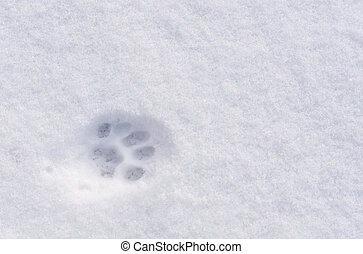 An animal footprint in the snow