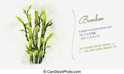 An animated card about bamboo - A short stylish animation of...