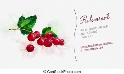 An animated card about Redcurrant - A short stylish...