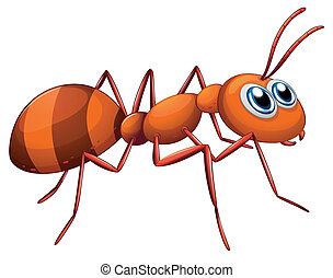 Illustration of an ant on a white background