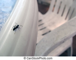 an ants world - A unique perspective of a common carpenter...