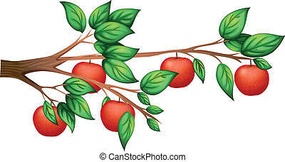 An apple tree - Illustration of an apple tree on a white...