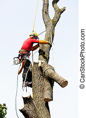 An arborist cutting a tree with a chainsaw