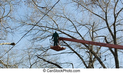 An arborist cutting a tree with a chainsaw - Tree pruning by...