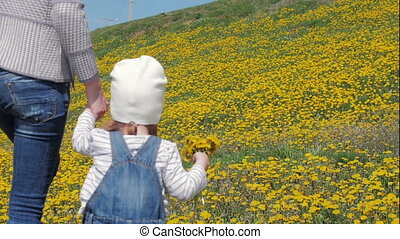 An attractive woman goes by the hand with a little beautiful girl on the field, meadow with dandelions. Happy childhood. Family, love. Slow motion