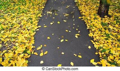 autumn leaf fall in city park, Russia - An autumn leaf fall...