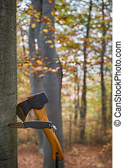 an axe and a knife stuck up in the tree stump in autumn forest