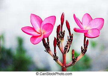 Desert rose new born in soft light
