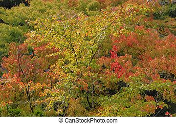 early fall season at garden of Tofukuji Temple