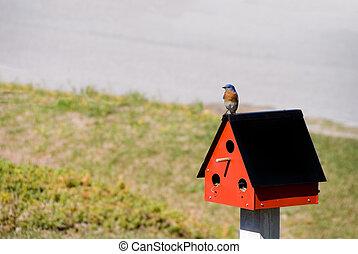 Eastern Bluebird - An Eastern Bluebird perched in the...