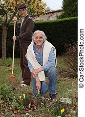 An elderly couple gardening