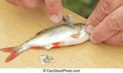 An elderly fisherman cleans a small fish. Prepares a dish for the family