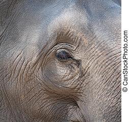 An elephant eye