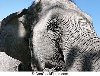 An elephant head