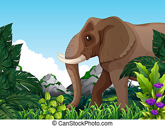 An elephant in the forest