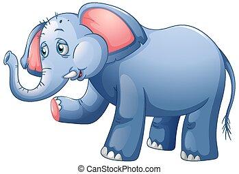 An elephant on white background