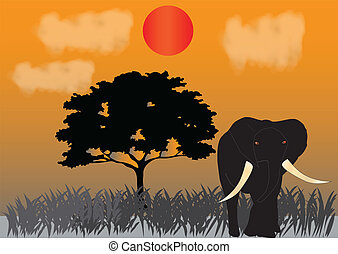 Elephant - An Elephant under the setting sun on the Savannah...