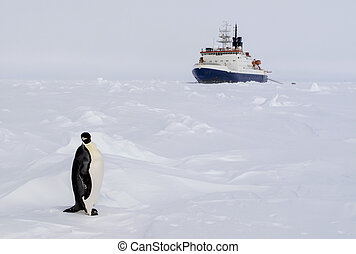 An emperor penguin and a polar ice breaker at the back ground