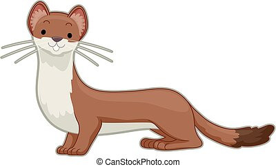 An Ermine Illustration - Illustration of a Stout or an...