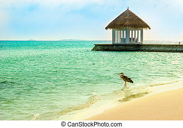 An exotic view of the part of the restaurant erected on a promontory towards the sea with a heron in the foreground, Maldives