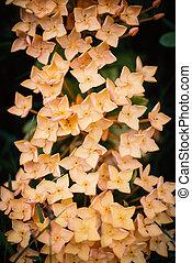 Flower spike with soft light